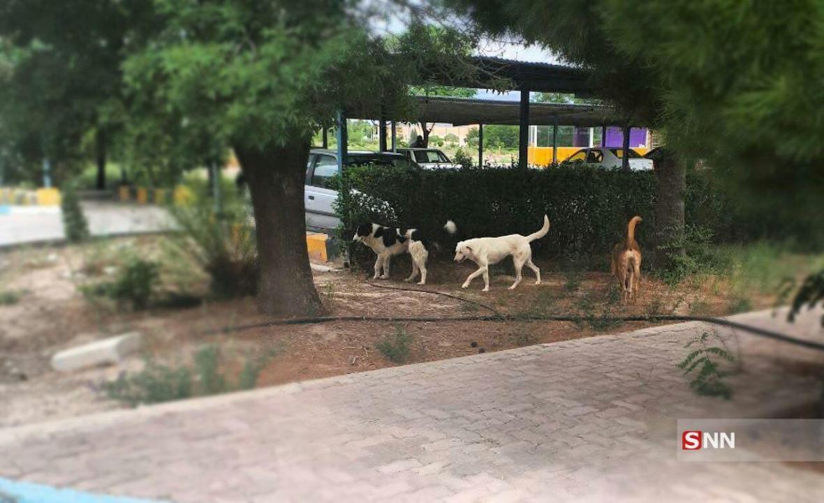 دانشگاه علوم پزشکی کرمان امکان اقتصادی دیوارکشی حریم دانشگاه را ندارد ، معاون دانشجویی متولی دریافت سگ نیست