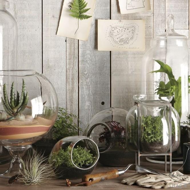 گیاهان آپارتمانی - آشنایی با انواع مدل گلدان گل و گیاه آپارتمانی ، عکس