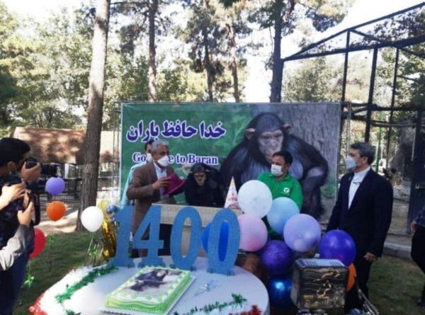 گودبای پارتی برای باران شامپانزه باغ وحش ارم!